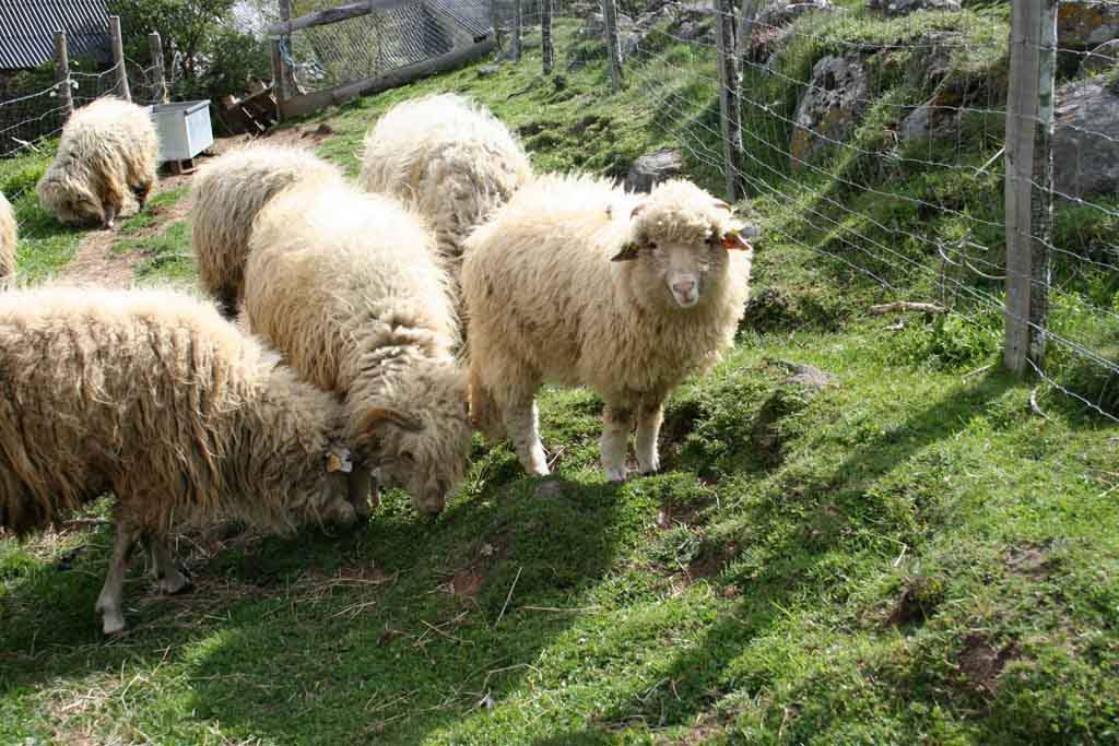 Les agneaux au soleil