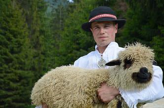 Mouton des Carpates tchèques
